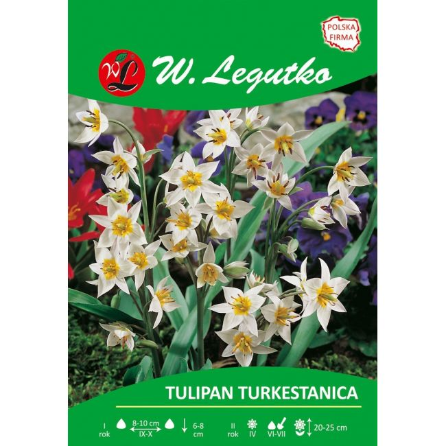 Tulipan - botaniczny - turkestanica