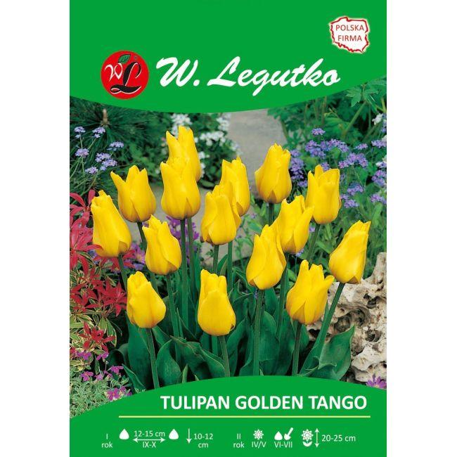 Tulipan - Golden Tango - Greiga - żółty