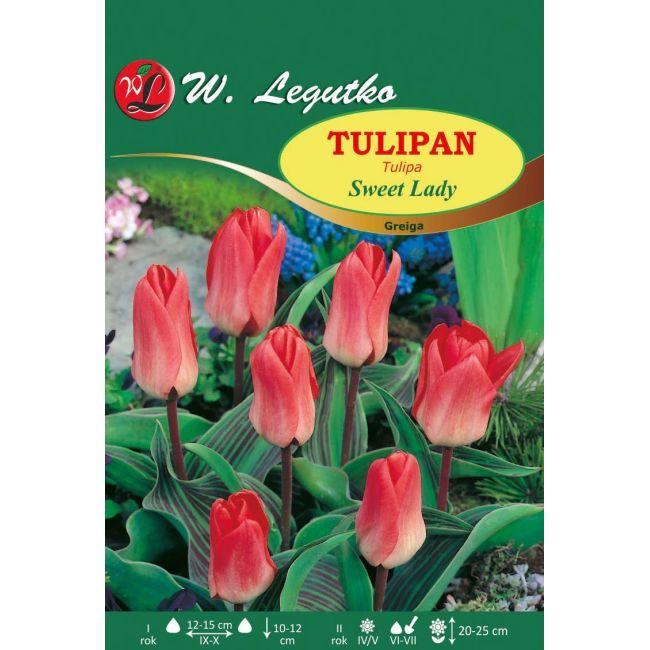 Tulipan - Sweet Lady - Greiga - koralowy