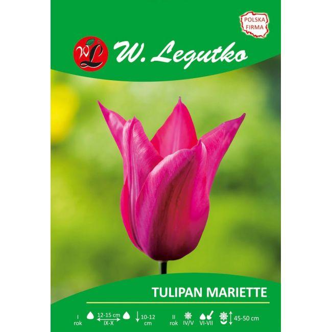 Tulipan - liliokształtny - Mariette