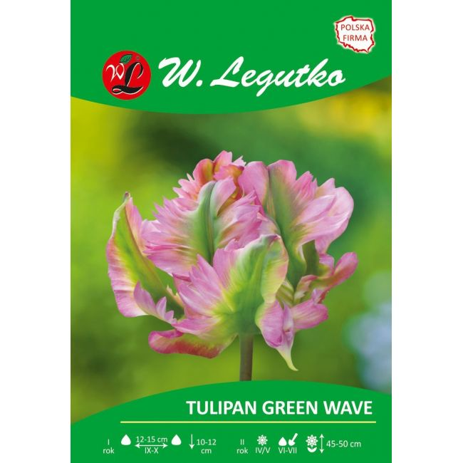 Tulipan Green Wave