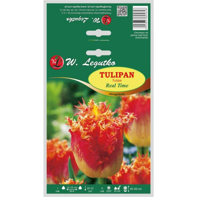 Tulipan Real Time