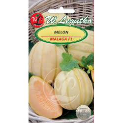 Melon Malaga - mieszaniec F1