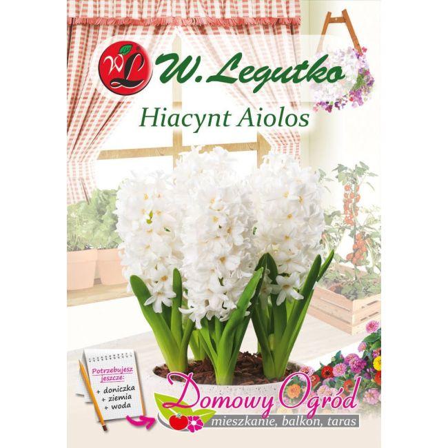 Hiacynt - Aiolos - biały
