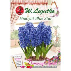 Hiacynt Blue Star