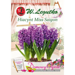 Hiacynt Miss Saigon
