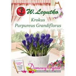 Krokus Purpureus Grandiflorus