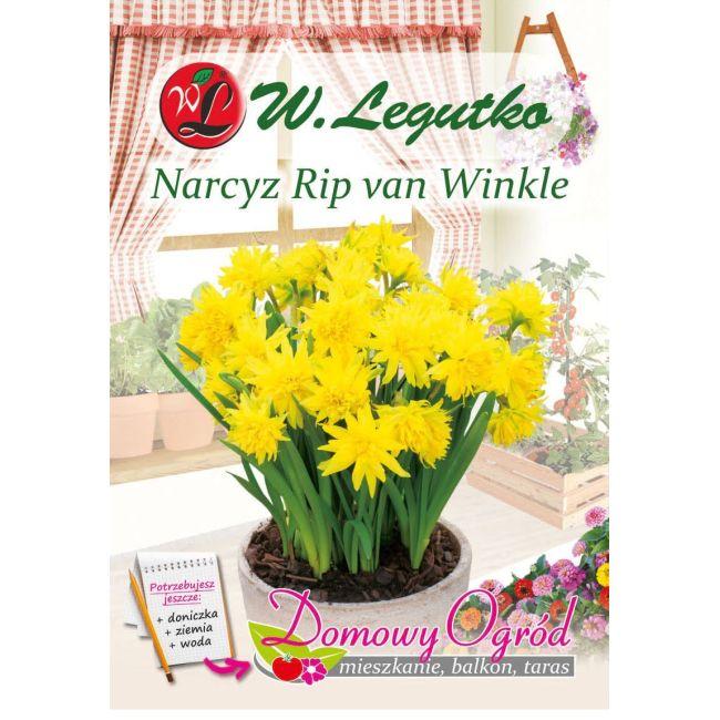 Narcyz - Rip van Winkle - species - żółty