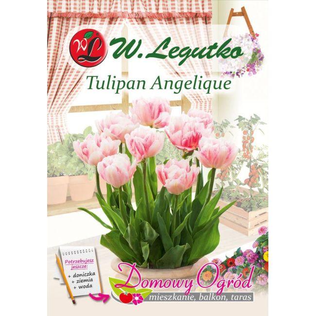 Tulipan - Angelique - 6 szt.