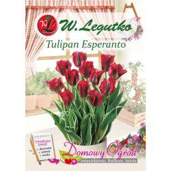 Tulipan Esperanto