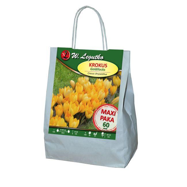 Krokus - Goldilocks - chrysanthus - żółty