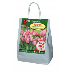 Tulipan Design Impression