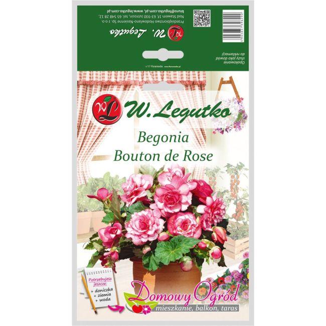 Begonia bulwiasta - Bouton de Rose