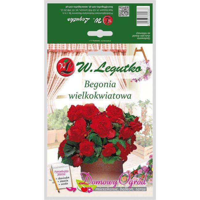 Begonia bulwiasta wielkokwiatowa - czerwona