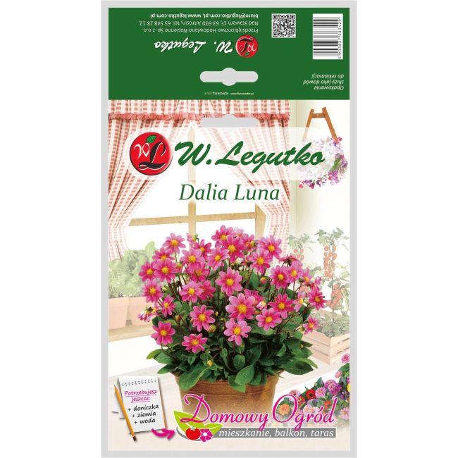 Dalia ogrodowa różowa - Top Mix - Luna