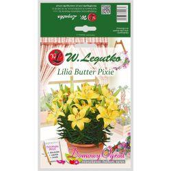 Lilia żółta - Butter Pixie