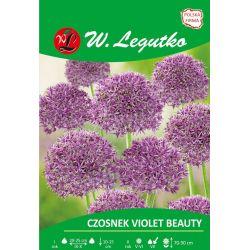 Czosnek Violet Beauty