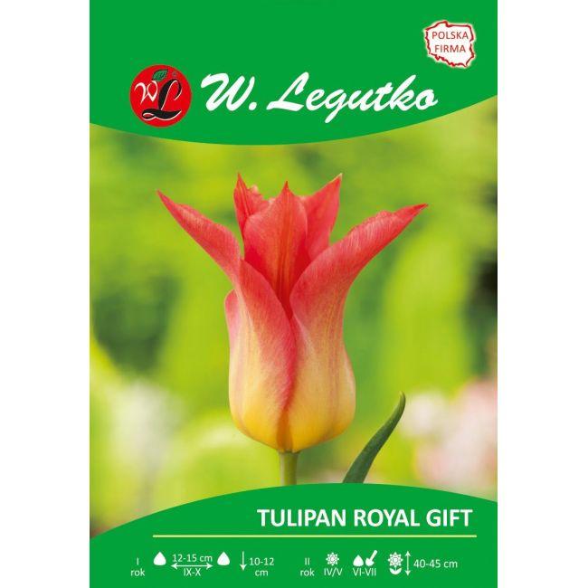 Tulipan Royal Gift