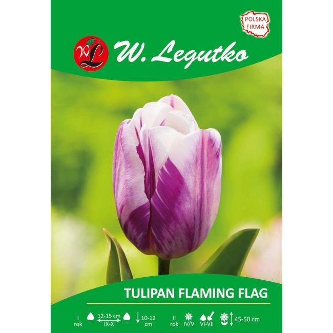 Tulipan Flaming Flag