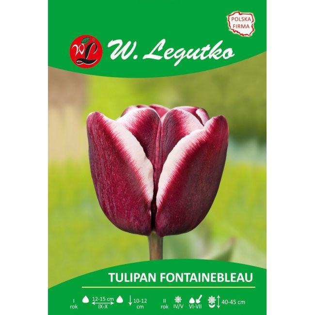 Tulipan Fontainebleau