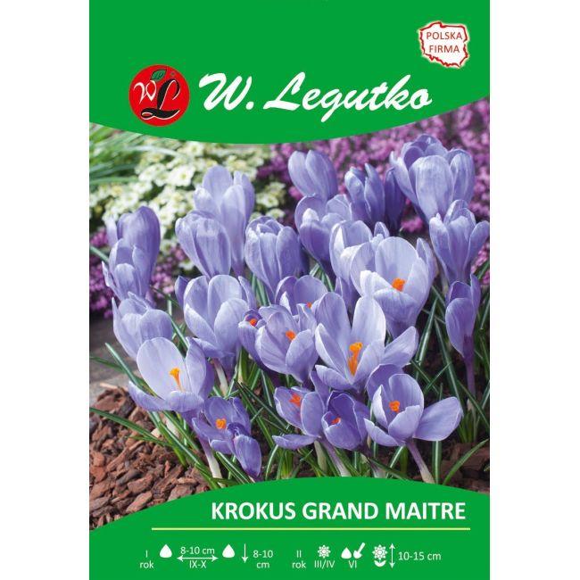 Krokus - Grand Maitre - Vernus - lawendowoniebieski