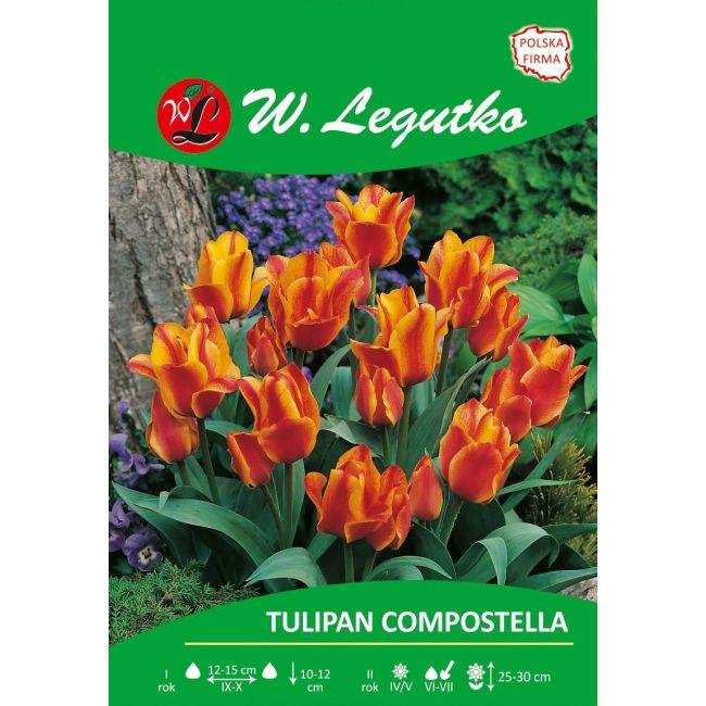 Tulipan Compostella
