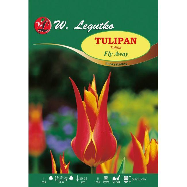Tulipan - Fly Away - 1szt.