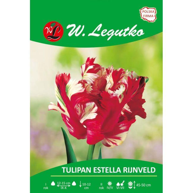 Tulipan Estella Rijnveld