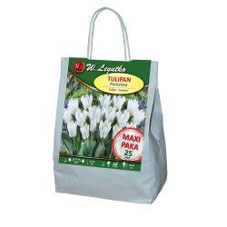 Tulipan - Purissima - fostera - biały