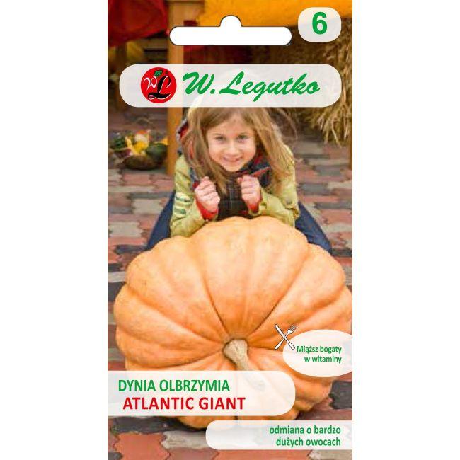 Dynia olbrzymia - Atlantic Giant