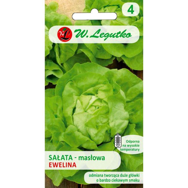 Sałata głowiasta masłowa - Ewelina