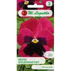 Bratek wielkokwiatowy/Viola x wittrockiana/Claret/różowe/0.50g