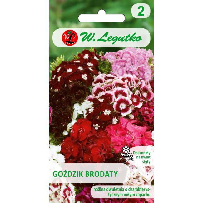 Goździk brodaty o kwiatach pojedynczych - mieszanka