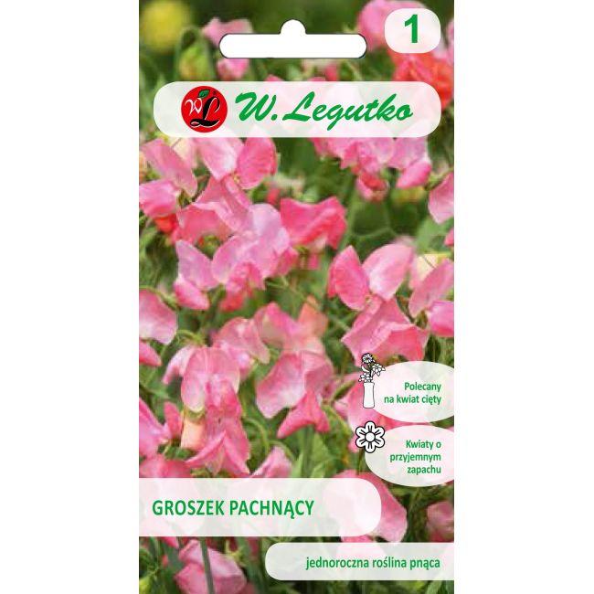 Groszek pachnący - różowy