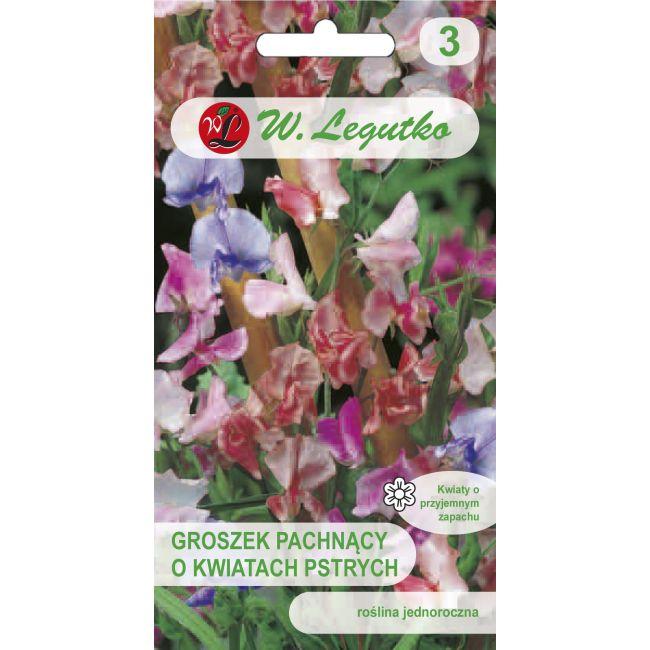 Groszek pachnący - mieszanka o kwiatach pstrych
