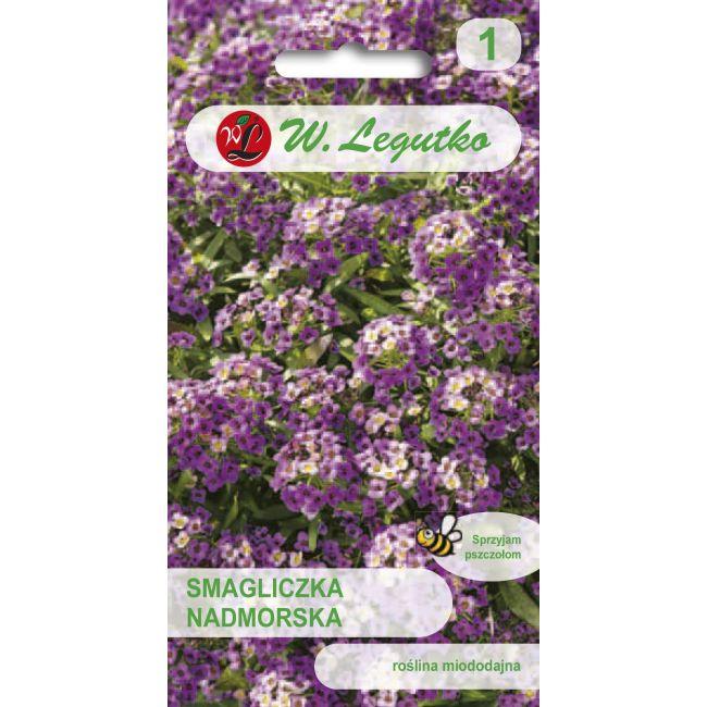 Smagliczka nadmorska - liliowofioletowa