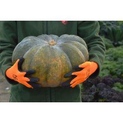 Rękawice ogrodnicze Comfort - szare - rozmiar 6