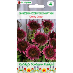 Kwiaty Polskie - Słonecznik ozdobny/Helianthus annuus/Cherry Queen/czerwone (c)/1.00g