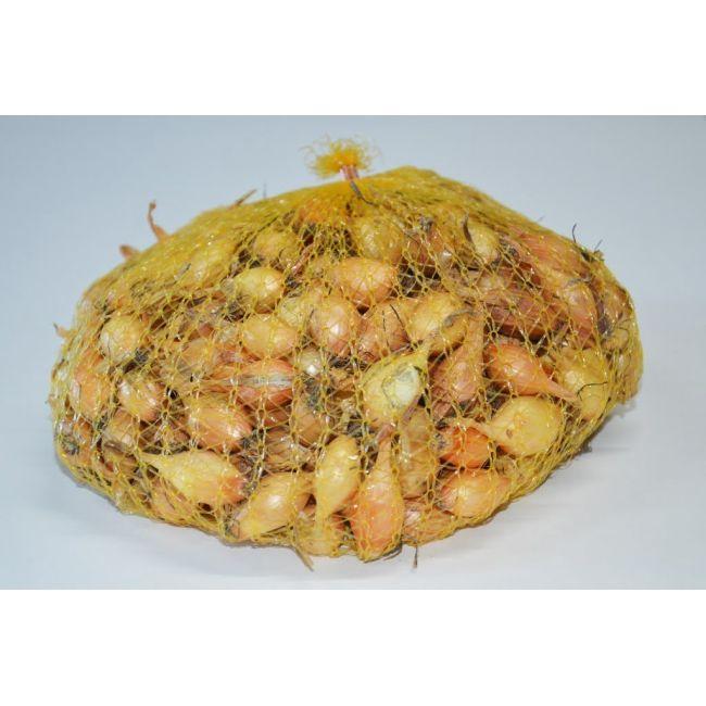 Cebula dymka - Senshyu Yellow - 0.5kg