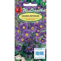 Sasanka - fioletowa (nasiona otarte)