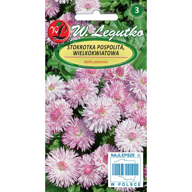 Stokrotka pospolita- wielkokwiatowa Maria- różowa