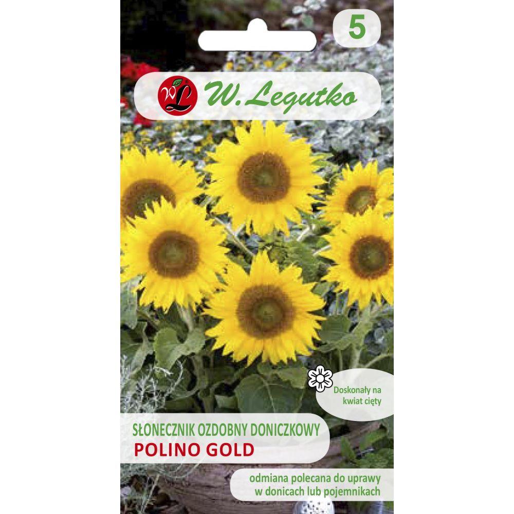 Słonecznik doniczkowy Polino Gold
