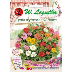 Cynia wytworna karłowa Pepito - mieszanka