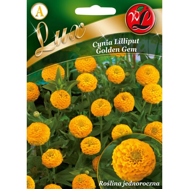 Cynia wytworna - Lilliput Golden Gem