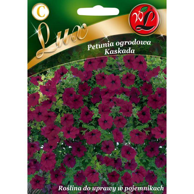 Petunia ogrodowa Kaskada - purpurowy