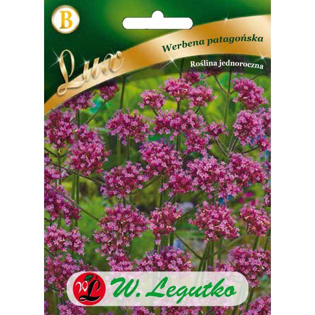 Werbena patagońska - liliowa