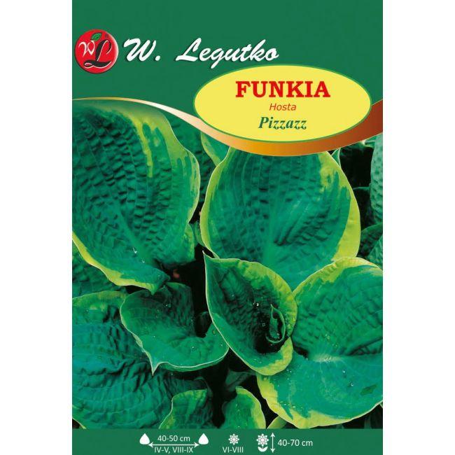 Funkia - Pizzazz
