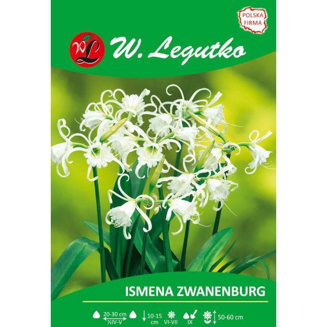 Ismena - Zwanenburg - biała
