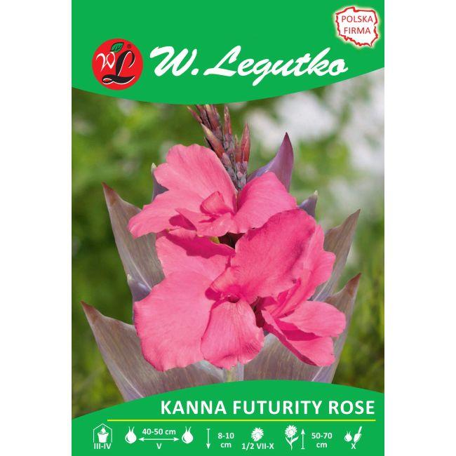 Kanna - brązowolistna - niska - Futurity Rose - różowa