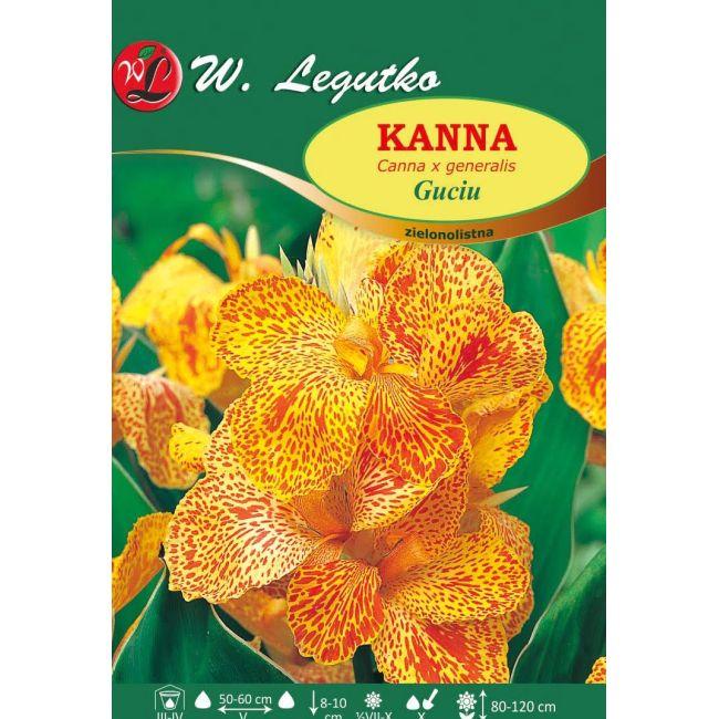 Kanna - zielonolistna - Guciu - żółto-czerwona